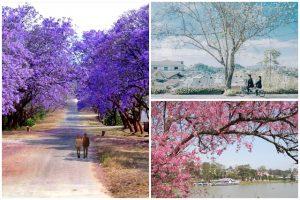 Ngất ngây Đà Lạt với những mùa hoa say đắm lòng người