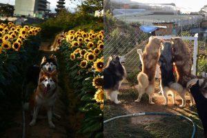 Phát ngất với khu vườn nuôi 40 boss cute ở Đà Lạt