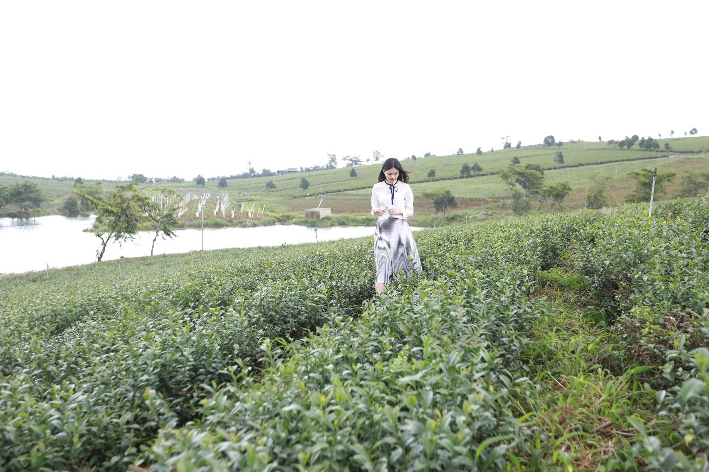 Á hậu Thanh Tú thả hồn giữa nương trà ở Bảo Lộc
