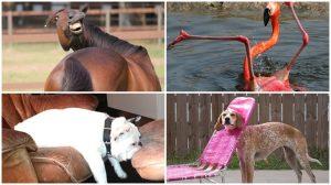 Những khoảnh khắc ngớ ngẩn đến đỡ không nổi của các loài vật