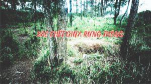 Truy tìm bằng chứng: Xác chết bí ẩn giữa rừng thông