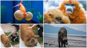 """13 bức hình chứng minh tuy không được đẹp mã nhưng những loài động vật này vẫn có khoảnh khắc đáng yêu """"chết đi được"""""""