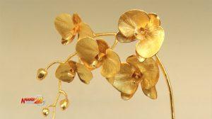 Phong lan mạ vàng giá hàng chục triệu đồng vẫn cháy hàng