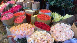 TP.HCM: Hoa hồng tăng giá gấp 3 lần trước ngày Lễ tình nhân