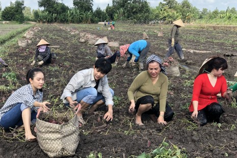 Việt Nam Mến Yêu: Tim và Hồng Tuyết hóa thành nông dân rỡ khoai