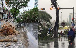 Đà Nẵng: Cây xanh đổ hàng loạt sau bão số 5, nhiều đoạn đường bị ngập khiến giao thông hỗn loạn