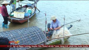 """Cá mòi – đặc sản """"trời cho"""" trên sông Hồng"""